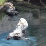 Otter!!!