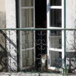 Muschi auf Balkon